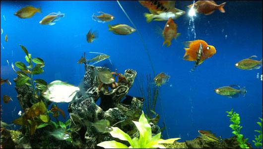 225-gallon fish tank at Upstate Golisano Children's Hospital
