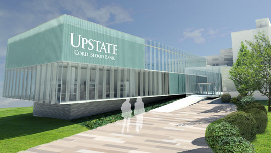 Upstate breaks ground for umbilical cord blood bank