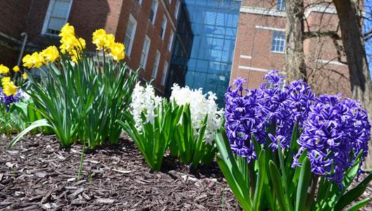 Weiskotten Hall courtyard looks like Spring