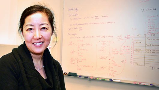 Upstate study uncovers new information on genomic instability