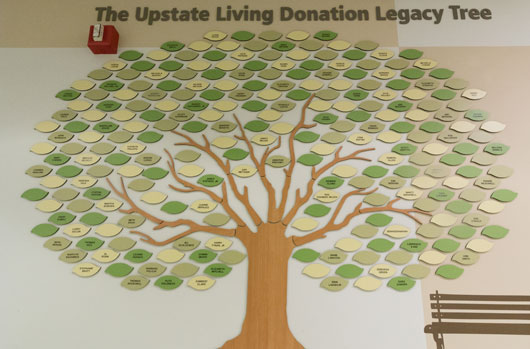 Living Donation Legacy Tree helps celebrate life and raises awareness of organ donation