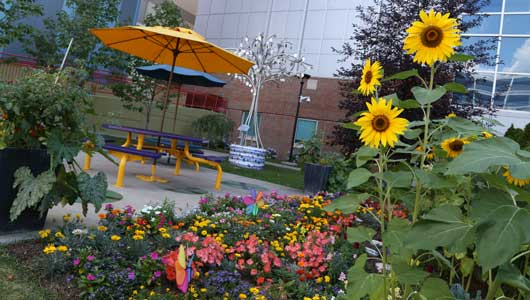 A sea of summer blossoms paints a color picture in the Upstate Golisano Children's Hospital gardens.