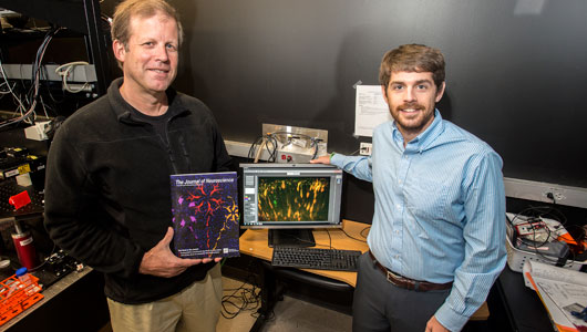 Upstate study featured on cover of The Journal of Neuroscience