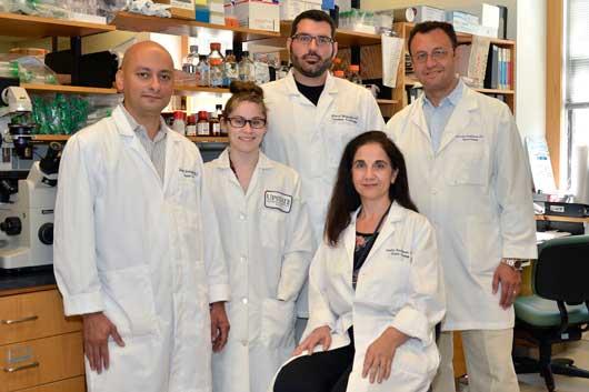 Upstate researchers find key cellular enzyme could be effective drug target in urologic cancer cells