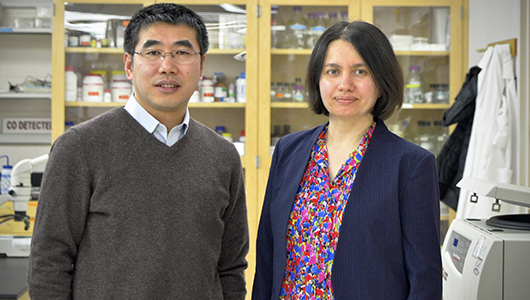 Two from Upstate awarded grants to further breast cancer research