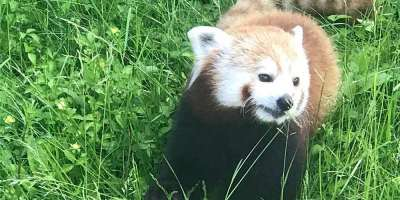 Upstate Cancer Center to hold virtual National Cancer Survivors Day event June 7 with a visit from Rosamond Gifford Zoo