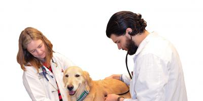Treatment for canine cancer serves as model for humans