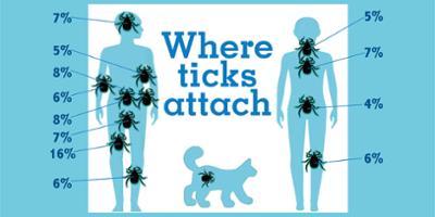 Send in the ticks